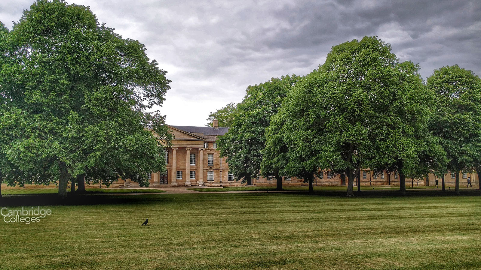 Magnificent trees in the grounds of Downing college